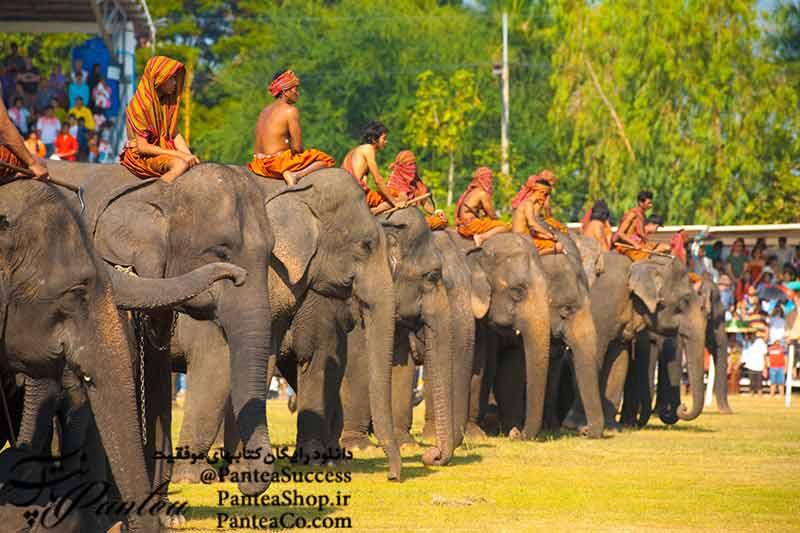 چه کسی می گوید فیلها نمی توانند برقصند